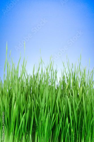 Deurstickers Gras green grass on blue background