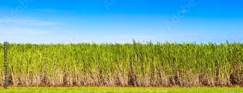 Slika na platnu Panorama of sugar cane plantation, Queensland, Australia