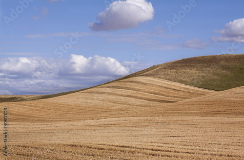 Fotografija  Undulating Planting Lines of Fields in Palouse Region