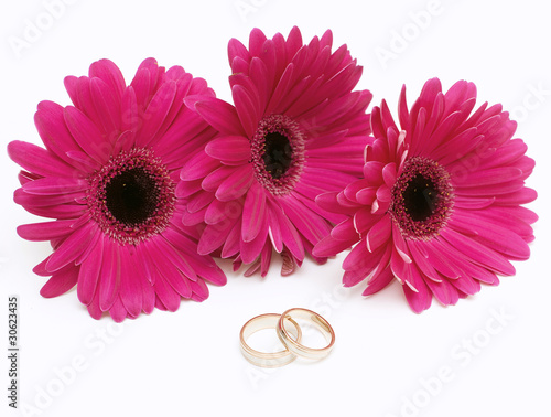 Staande foto Gerbera purple gerbera and two wedding rings