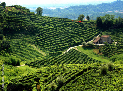 Tuinposter Wijngaard paesaggio collinare con vigne di prosecco