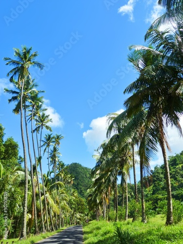 Strada Esotica di Palme-Palmtrees Exotic Street-2