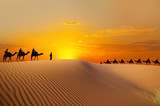 Fototapeta Sunset - Travel with camel