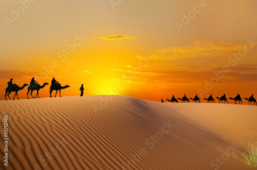 Poster de jardin Orange Travel with camel
