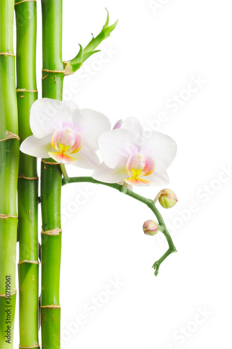 Fototapeta bambus   storczyk-i-bambusy