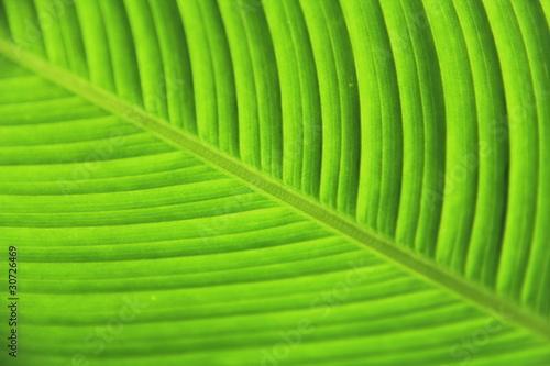 Photo green leaf tree
