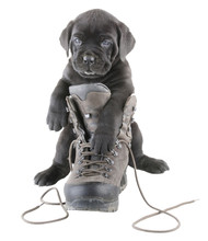 Doggy And Boot
