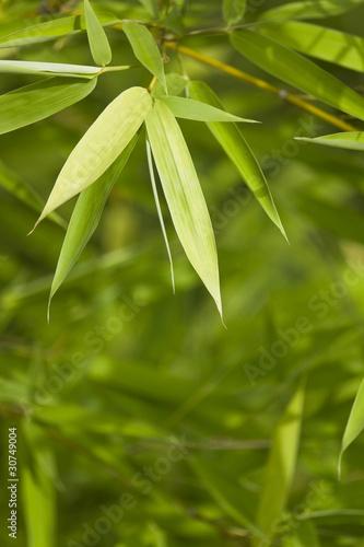 Foto-Kissen - Fresh green bamboo background 02 (von styleuneed)