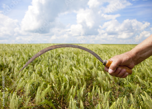 Foto Hand keep sickle over wheat field.