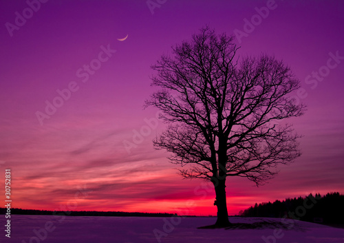 Spoed Foto op Canvas Violet sunset in the field