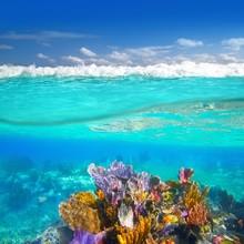 Mayan Riviera Coral Reef Underwater Up Down Waterline