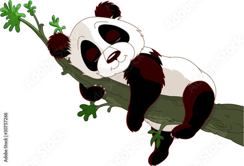 Poster Magie Panda sleeping on a branch