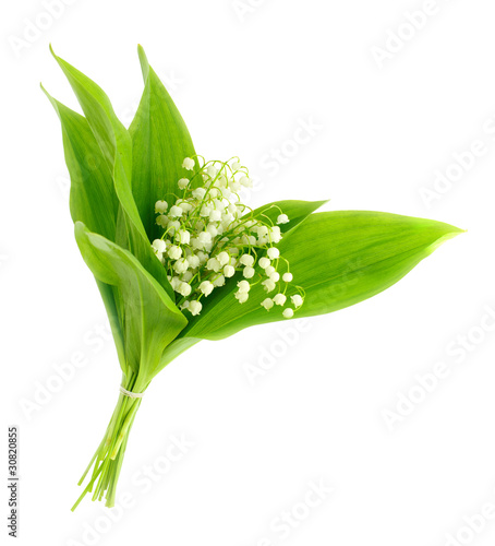 Garden Poster Lily of the valley lilies of the valley