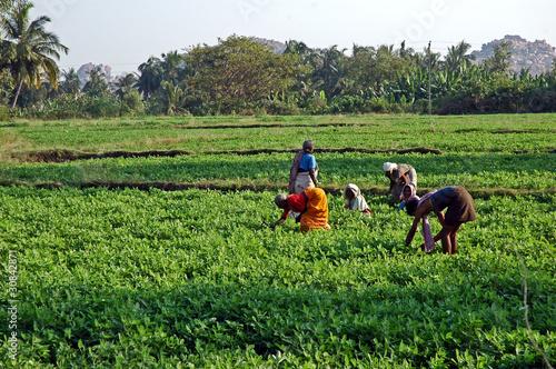 In de dag India India del sud, donne al lavoro
