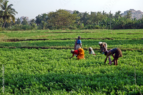 Fotobehang India India del sud, donne al lavoro