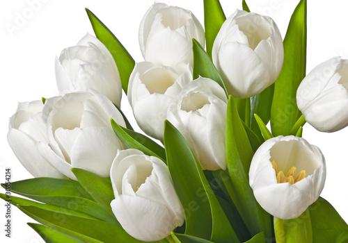 Tuinposter Tulp tulips