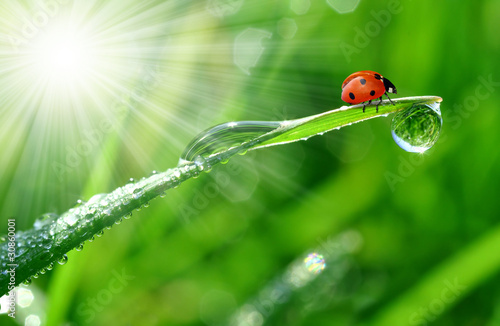 Photo  fresh morning dew and ladybird