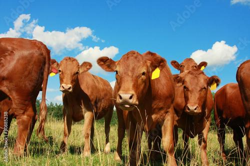 Fotografía Cow on green grass