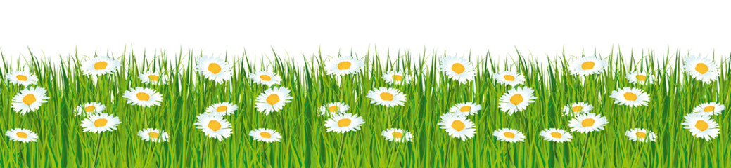 Naklejka Fresh green grass banner with daisies