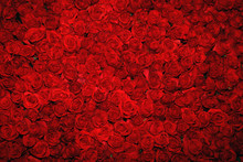 Background With Red Roses