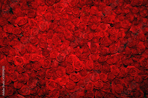 Foto op Canvas Roses Background with red roses