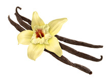 Vanilla Bean And Flower (clipp...