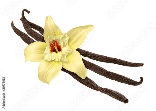 Cuadros en Lienzo Vanilla Bean and Flower (clipping path)