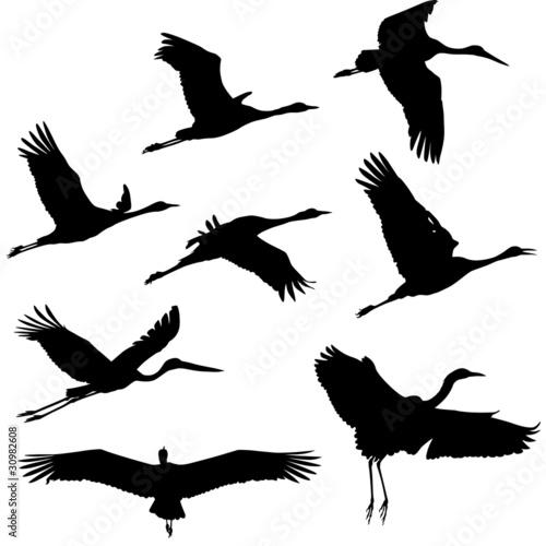 Fotografie, Obraz  Zugvögel, Wandervögel