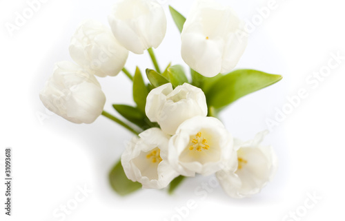 Wall Murals Lily of the valley les tulipes