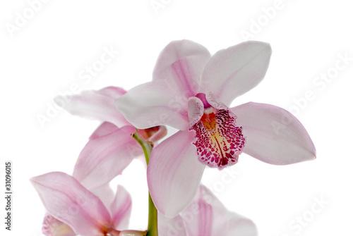 Foto op Plexiglas Magnolia White and pink orchids