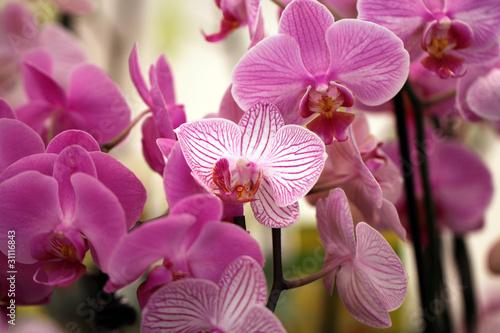 Foto auf AluDibond Orchideen Orchideenblüte