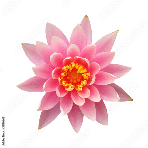 Poster de jardin Nénuphars Water lily isolated on white background – clipping path included