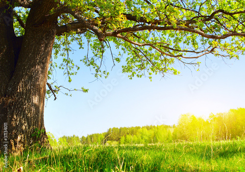 Foto op Plexiglas Landschappen Tree