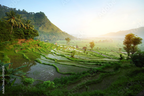 Garden Poster Rice fields Bali