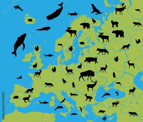 zwierzeta-europy