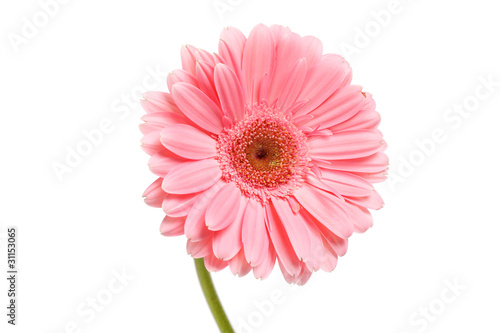 Aluminium Prints Gerbera beautiful gerber