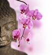Bouddha et orchidée rose