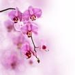 Leinwandbild Motiv Orchidée rose, fond pastel