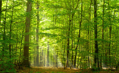 Panel Szklany Podświetlane Drzewa Grüner Laubwald