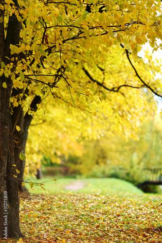 Poster Jaune autumn trees