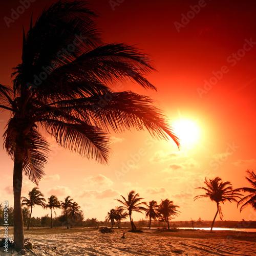 palma-wschodu