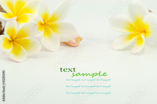 Spoed Foto op Canvas Frangipani frangipani flower on white background