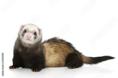 Billede på lærred Ferret on a white background