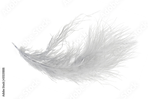 single very fluffy light feather isolated on white