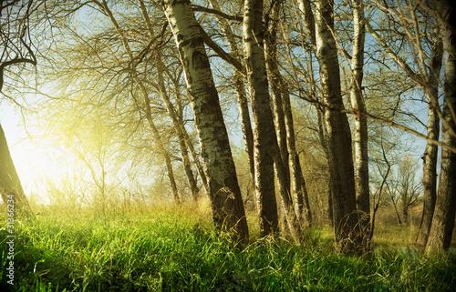 Obrazy tajemniczy ogród zachod-slonca-i-drzewa