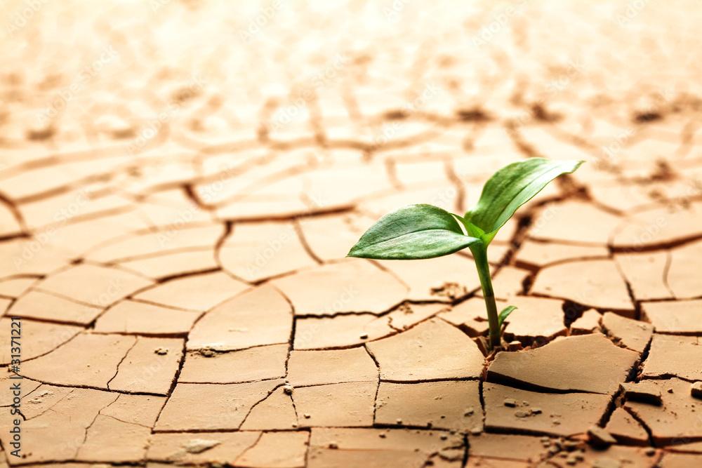 Fototapeta Plant in dried cracked mud