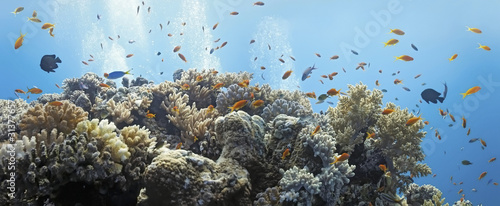 Coral scene - panorama #31377657