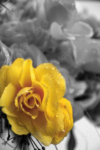 zolty-kwiat