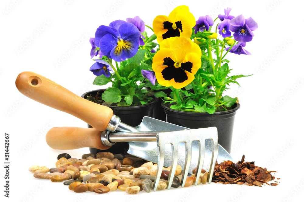 Fototapeta kolorowe bratki z narzędziami ogrodniczymi