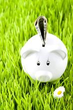 Piggy Bank On Grass With Money